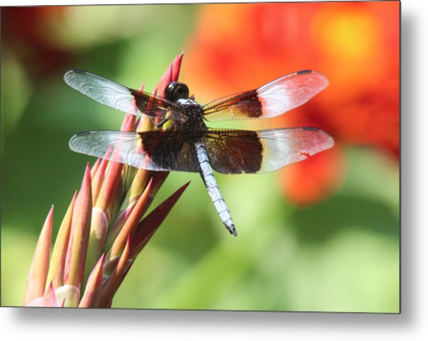 Dragonfly Metal Print by Jill Bell