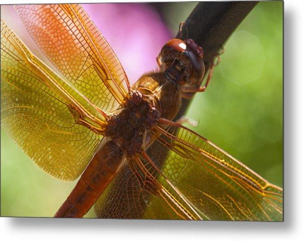 Dragonfly Patterns Metal Print