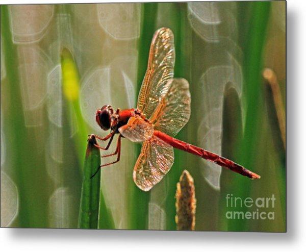 Dragonfly Profile Metal Print