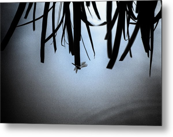Dragonfly Silhouette Metal Print