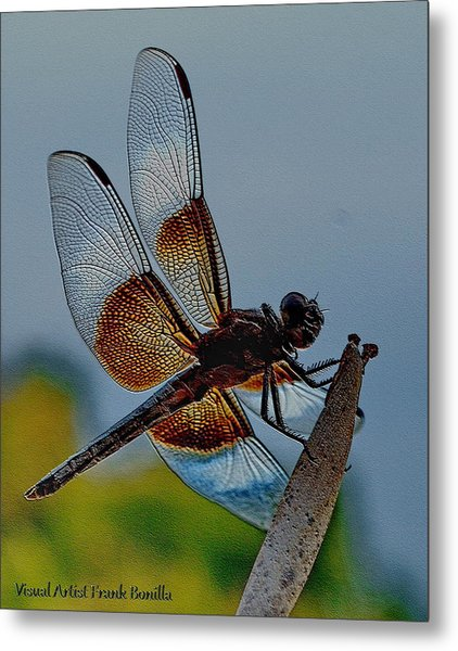 Metal Print featuring the digital art Dragonfly Sky Print by Visual Artist Frank Bonilla