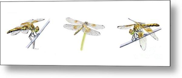 Dragonfly Trilogy Metal Print
