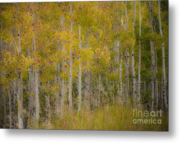 Dreaming Of Fall Metal Print