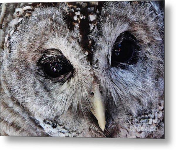 Dreaming Owl Metal Print