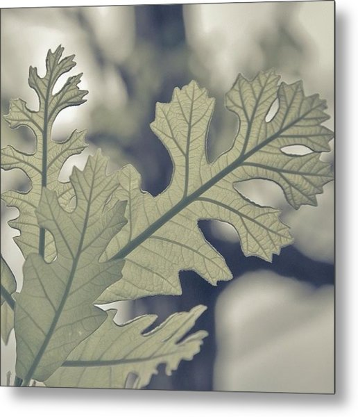 Dreamt Myself Astray | #spring #nature Metal Print by Lotus Carroll