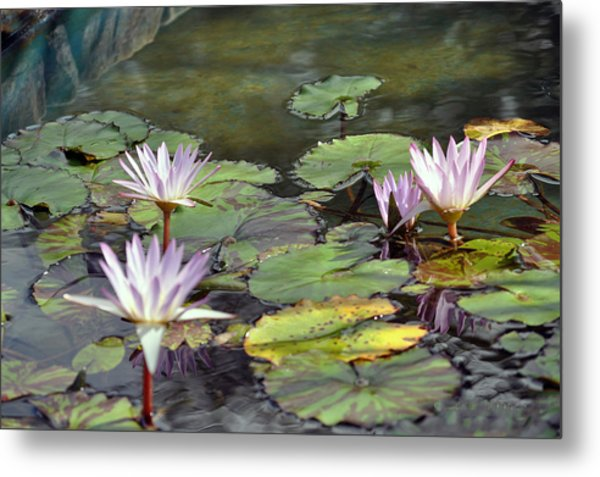Dreamy  Water Lillies Metal Print by Judith Russell-Tooth