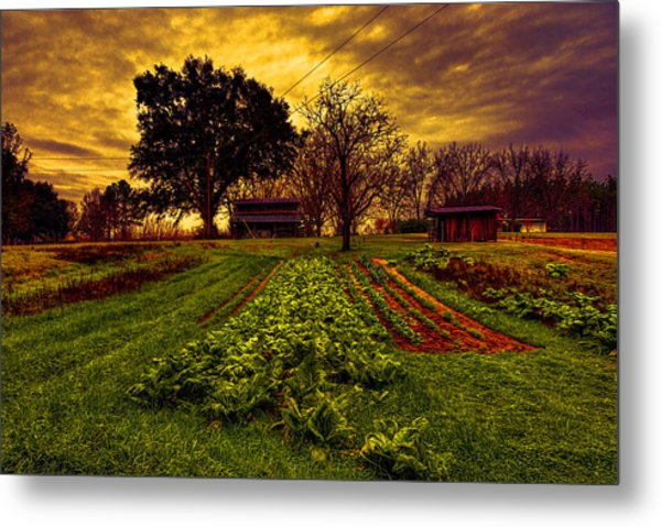 Dreary Farm Day Metal Print