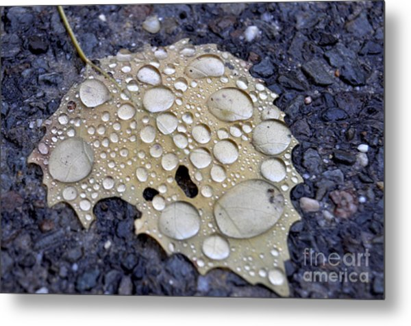 Drenched Leaf Metal Print