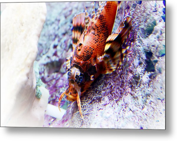 Dressed Up... Metal Print