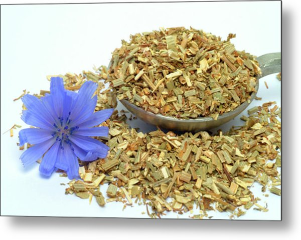 Dried Chicory Leaves And Flower Metal Print