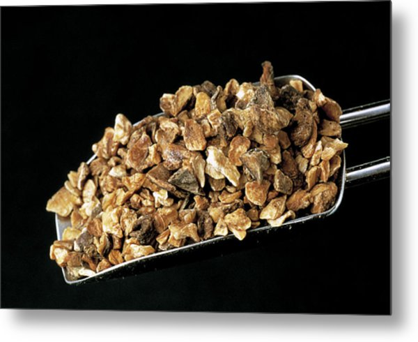 Dried Chicory Roots Metal Print