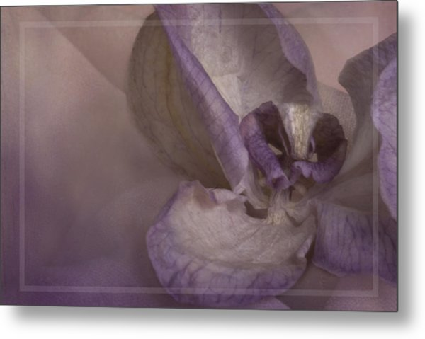 Dried Orchid Metal Print by Cindy Rubin