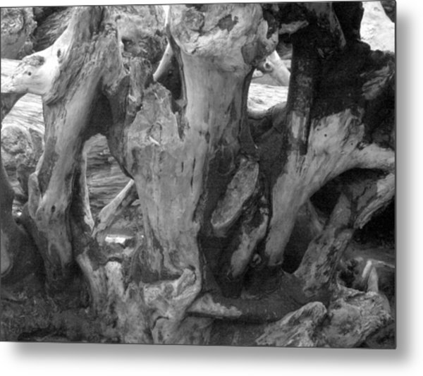 Drift Wood Cove Metal Print