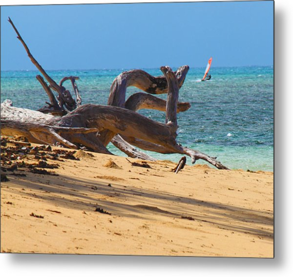 Metal Print featuring the photograph Drift Wood by Debbie Cundy