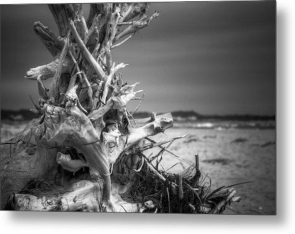 Driftwood At Race Point Metal Print