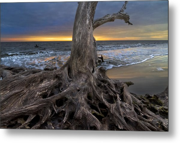 Driftwood On Jekyll Island Metal Print