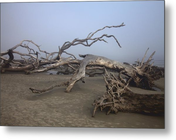 Driftwood Trees On Jekyll Island Metal Print