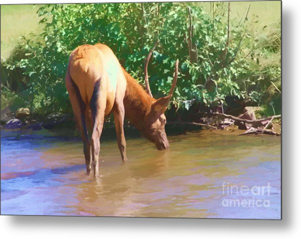 Drinking Elk Metal Print by Audreen Gieger