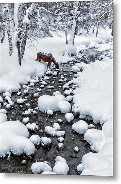 Drinking In Snow Metal Print by Hua Zhu