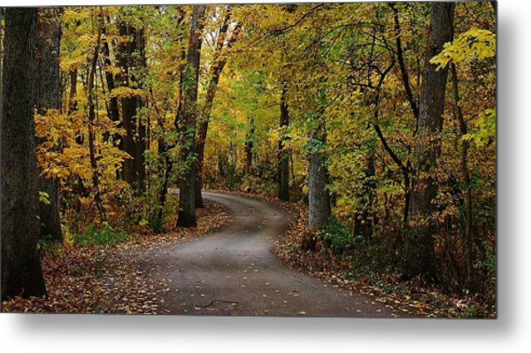 Drive Through The Woods Metal Print