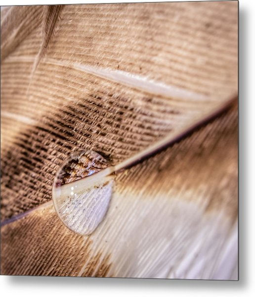Droplet On A Quill Metal Print