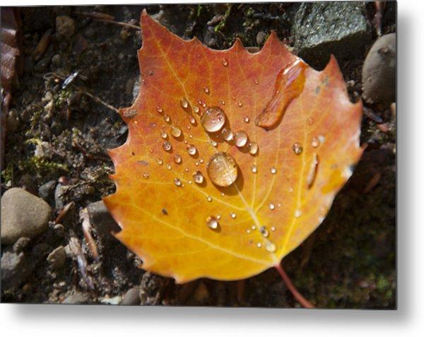 Droplets In Autumn Leaf Metal Print