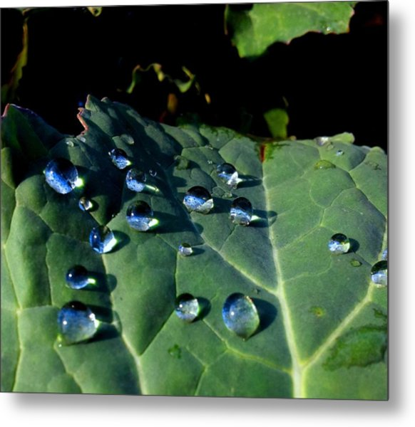 Drops On A Leaf Metal Print by Claudia Cefali