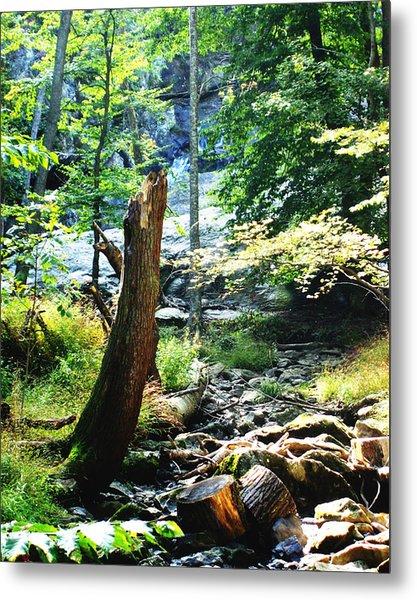 Dry Creek Metal Print