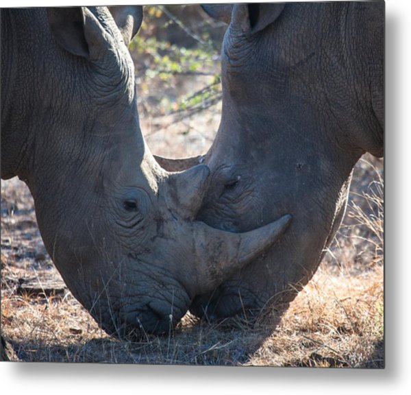 Dual Rhino's Metal Print by Craig Brown
