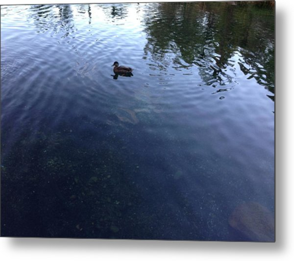 Duck Metal Print by Ron Torborg