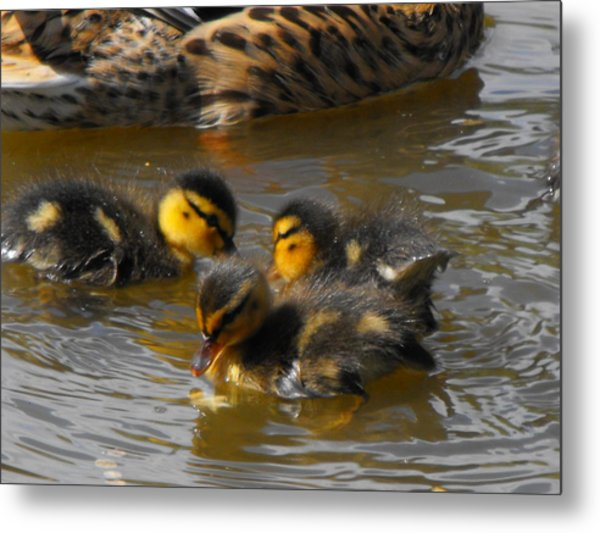 Duckling Splash Metal Print