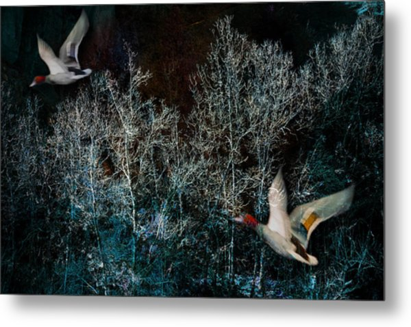 Metal Print featuring the photograph Ducks In Trees West Fork Number Three by Bob Coates