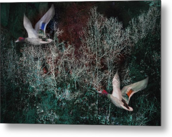 Metal Print featuring the photograph Ducks In Trees West Fork Number Two by Bob Coates
