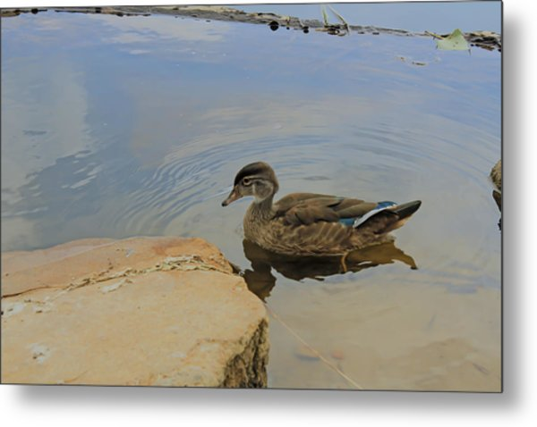 Ducky One Metal Print
