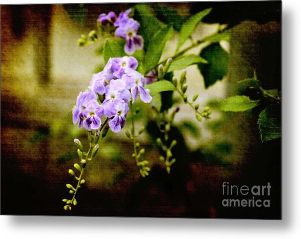 Duranta Bush Metal Print