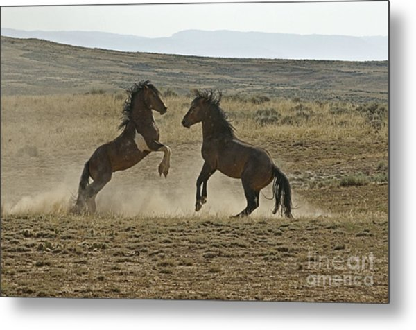 Dust Up At Mccullogh Peaks Metal Print by Bob Dowling