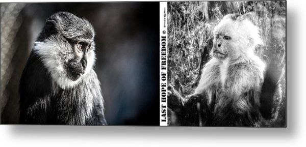 Metal Print featuring the photograph diptych Last hope of Freedom  by Stwayne Keubrick