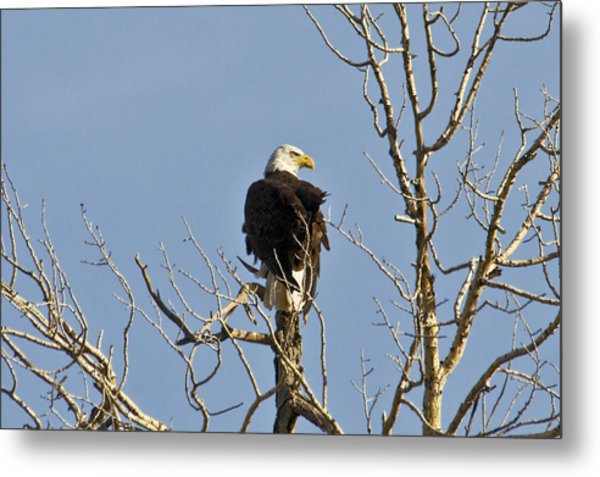 Metal Print featuring the photograph Eagle by David Armstrong