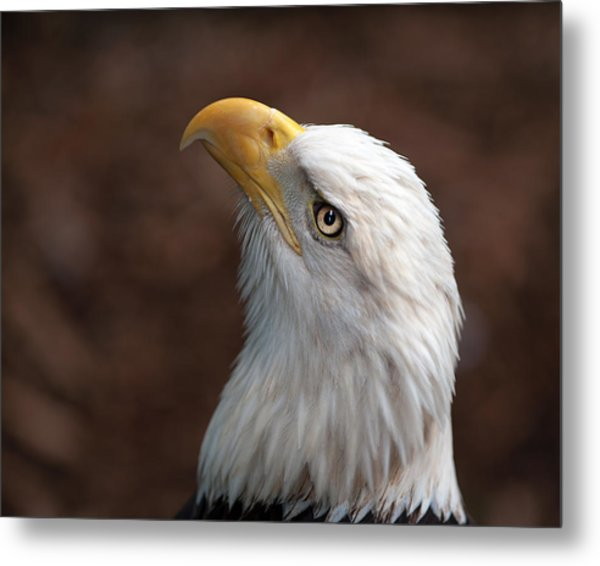 Eagle Eye Metal Print by Tammy Smith