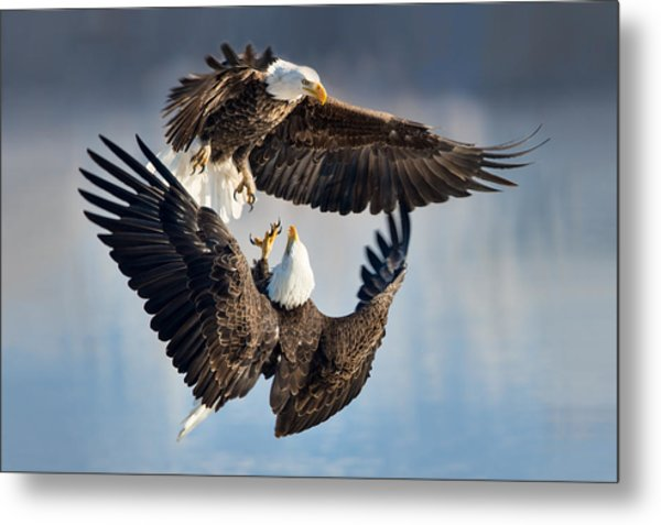 Eagle Fight Metal Print