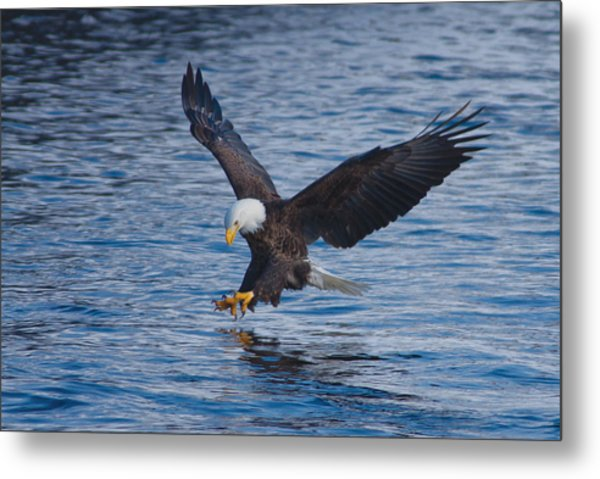Eagle Fishing Metal Print