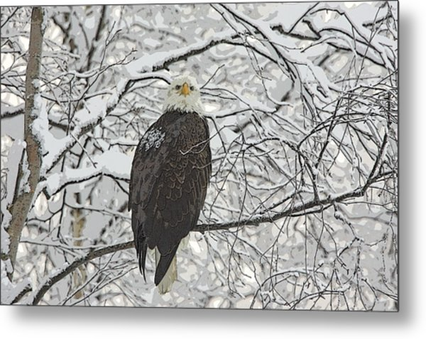 Eagle In Snow- Abstract Metal Print by Tim Grams