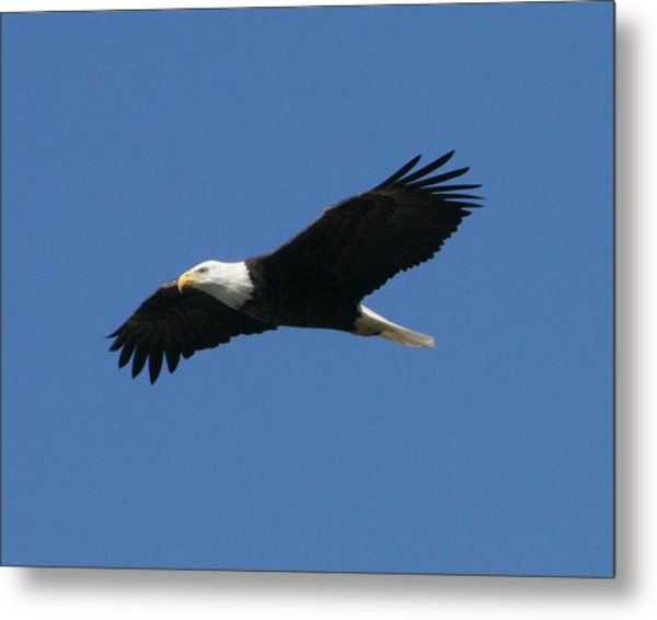 Eagle Metal Print by Jeff Wright