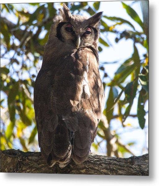 Eagle Owl Metal Print by Craig Brown
