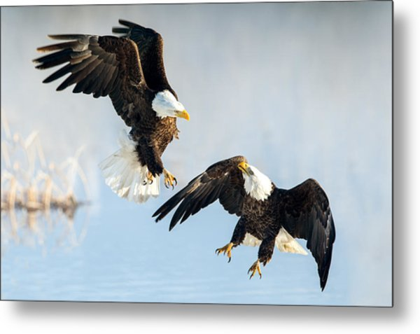 Eagle Showdown Metal Print