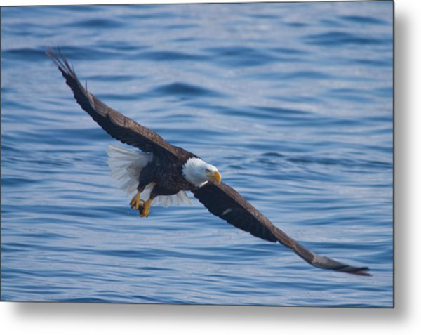 Eagle Soaring Metal Print