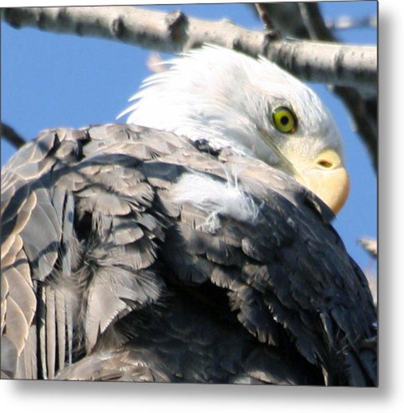 Eagle Metal Print by Valerie Wolf
