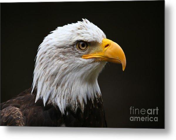 Bald Eagle Profile Metal Print