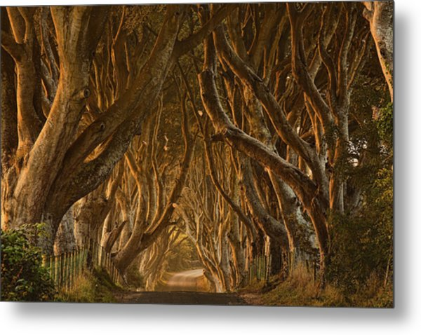 Early Morning Dark Hedges Metal Print by Derek Smyth