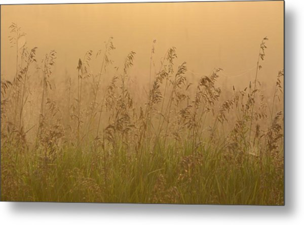 Early Morning Field Metal Print